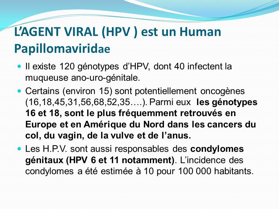 L'AGENT VIRAL (HPV ) est un Human Papillomavirid ae Il existe 120 génotypes d'HPV, dont 40 infectent la muqueuse ano-uro-génitale. Certains (environ 1