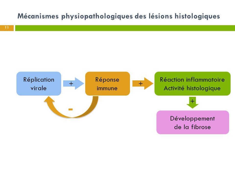 Mécanismes physiopathologiques des lésions histologiques 11 + + Réplication virale Réponse immune Réaction inflammatoire Activité histologique Dévelop