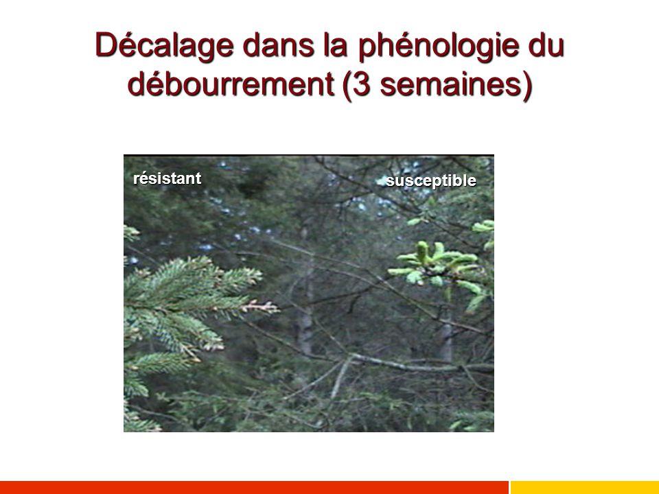 Décalage dans la phénologie du débourrement (3 semaines) résistant susceptible