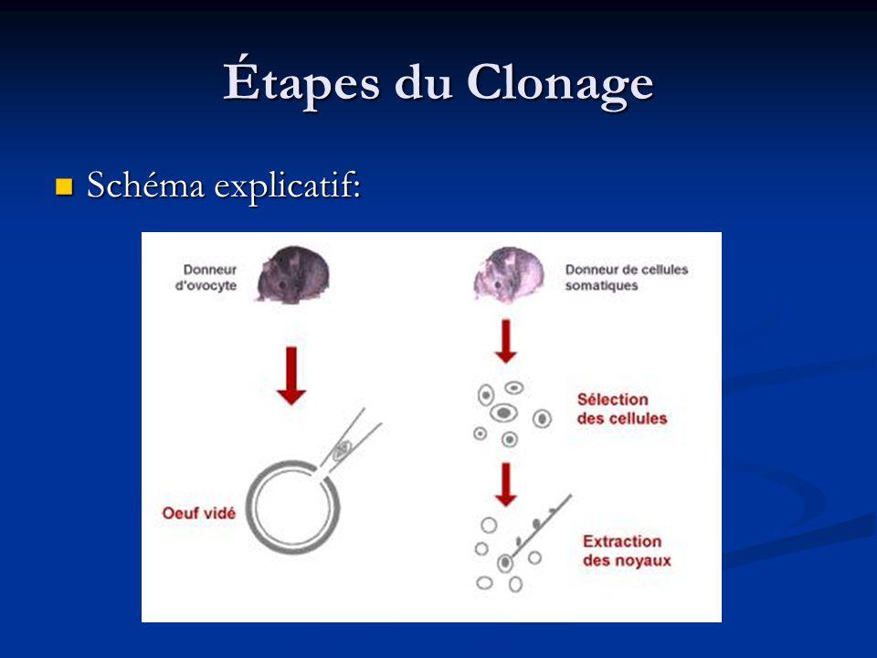 Étapes du Clonage Schéma explicatif: Schéma explicatif: