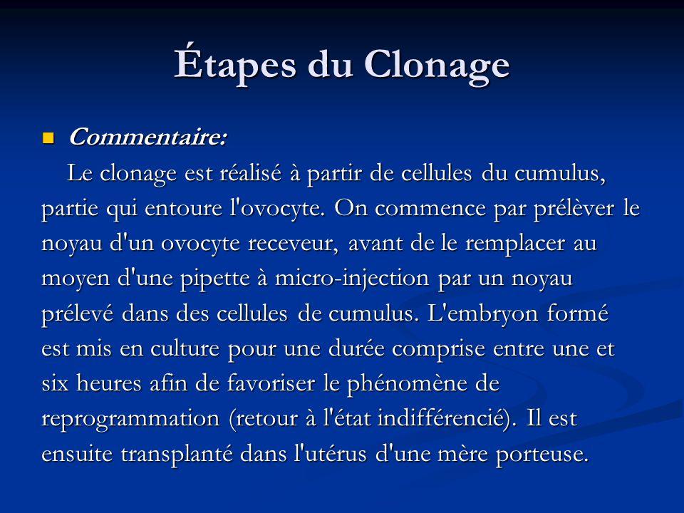 Commentaire: Commentaire: Le clonage est réalisé à partir de cellules du cumulus, partie qui entoure l'ovocyte. On commence par prélèver le noyau d'un
