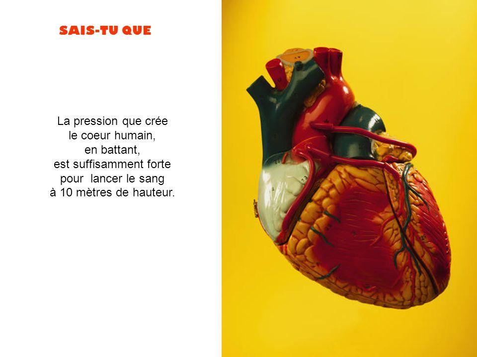 SAIS-TU QUE La pression que crée le coeur humain, en battant, est suffisamment forte pour lancer le sang à 10 mètres de hauteur.