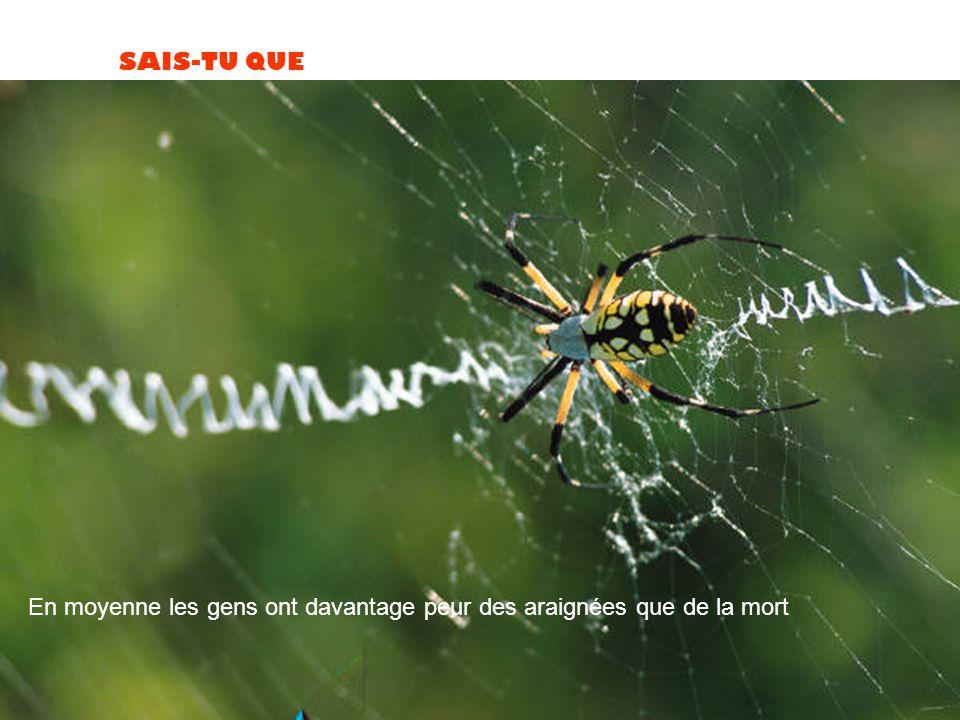 SAIS-TU QUE En moyenne les gens ont davantage peur des araignées que de la mort