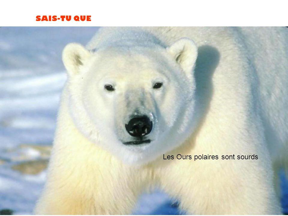 SAIS-TU QUE Les Ours polaires sont sourds