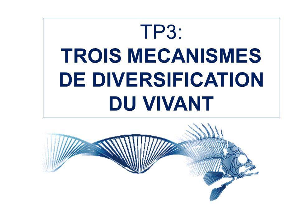 TP3: TROIS MECANISMES DE DIVERSIFICATION DU VIVANT