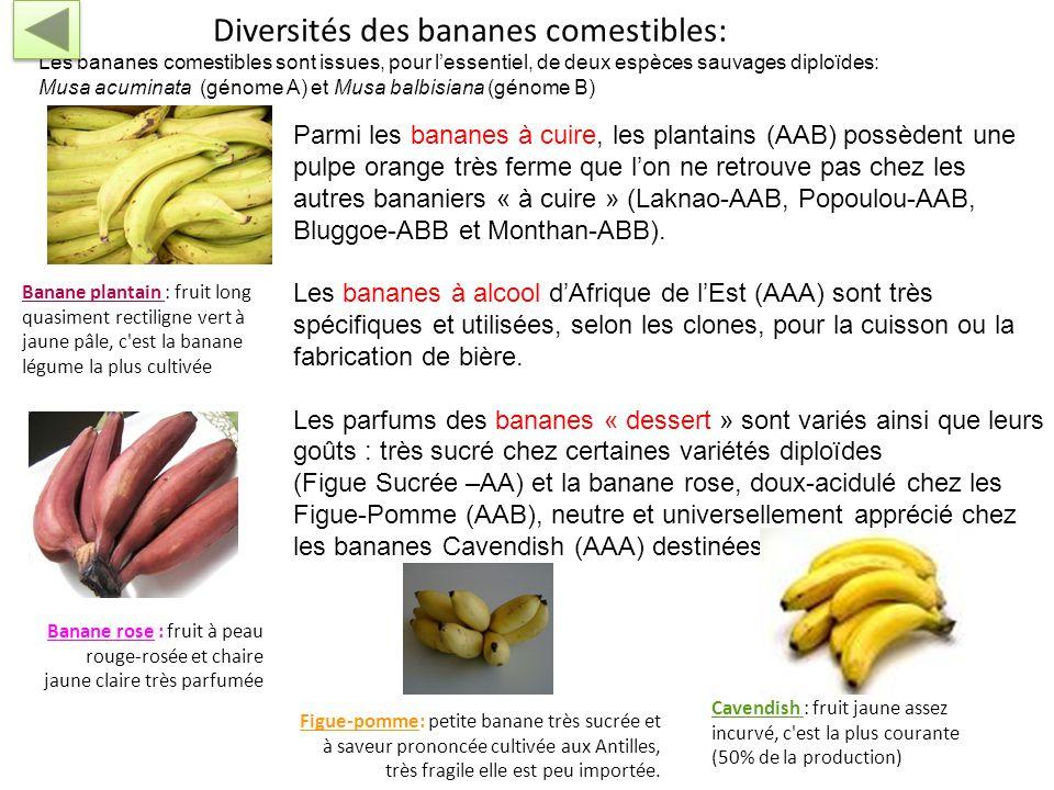http://www.snv.jussieu.fr/bmedia/Fruits/banane.htm La polyploïdisation peut résulter d'un accident de méiose correspondant à la non séparation des chr