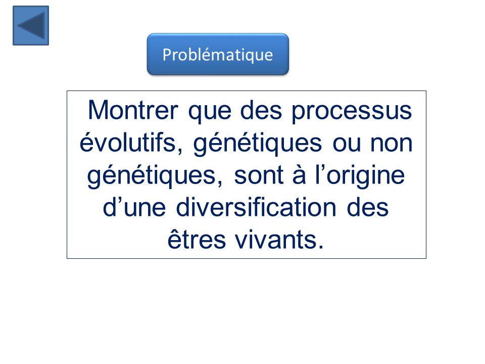 Montrer que des processus évolutifs, génétiques ou non génétiques, sont à l'origine d'une diversification des êtres vivants.