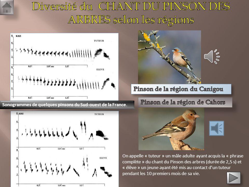 Etude du chant du Pinson des arbres Etude du chant du Pinson des arbres Diversification chez la banane: Création de variétés comestibles Diversificati