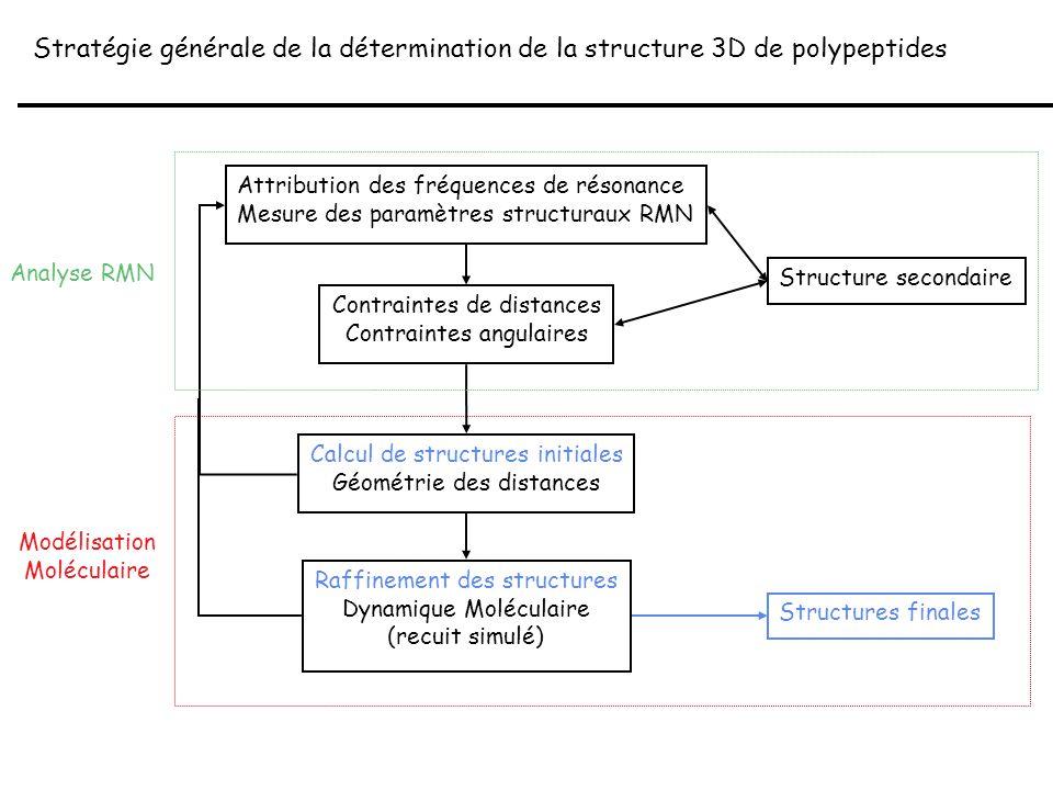 Modélisation Moléculaire Stratégie générale de la détermination de la structure 3D de polypeptides Attribution des fréquences de résonance Mesure des