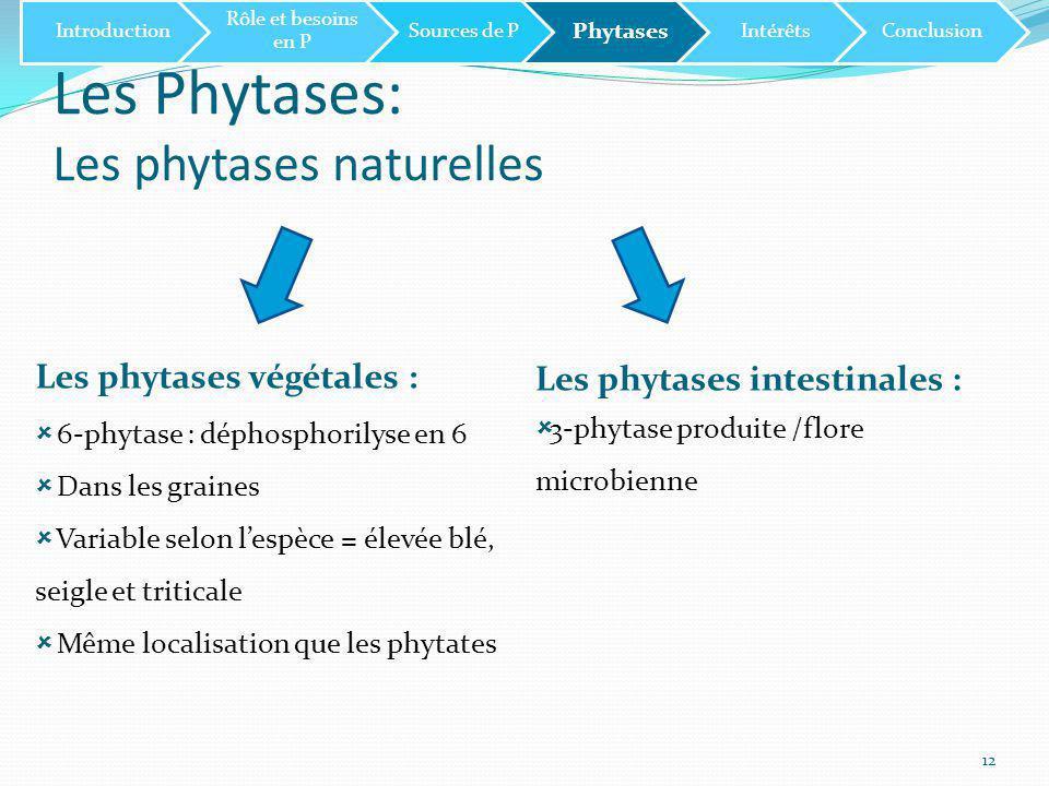 Les Phytases: Les phytases naturelles 12 Les phytases végétales :  6-phytase : déphosphorilyse en 6  Dans les graines  Variable selon l'espèce = élevée blé, seigle et triticale  Même localisation que les phytates Les phytases intestinales :  3-phytase produite /flore microbienne Introduction Rôle et besoins en P Sources de P Phytases IntérêtsConclusion
