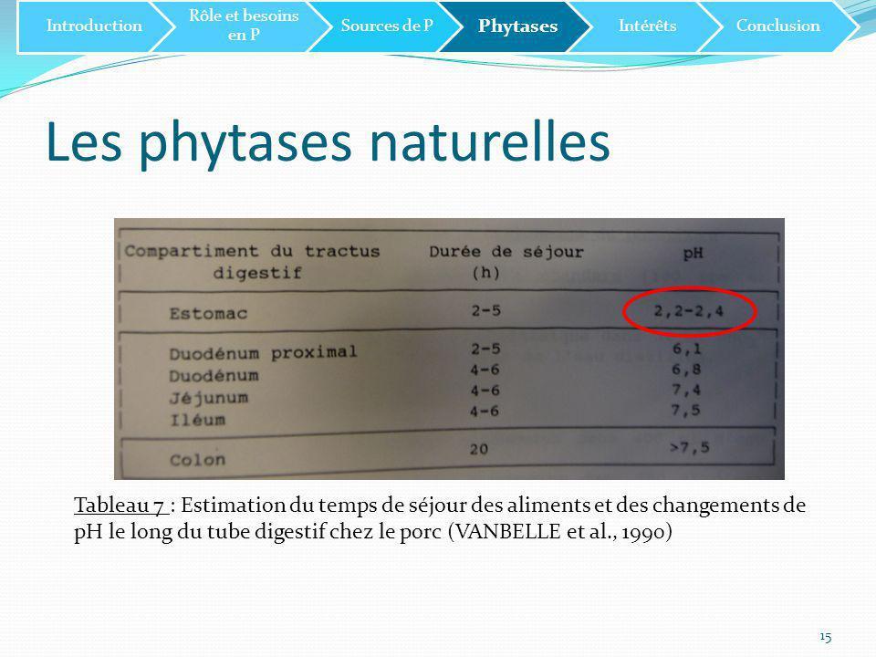 Les phytases naturelles 15 Tableau 7 : Estimation du temps de séjour des aliments et des changements de pH le long du tube digestif chez le porc (VANBELLE et al., 1990) Introduction Rôle et besoins en P Sources de P Phytases IntérêtsConclusion
