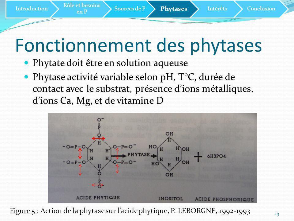 Fonctionnement des phytases 19 Introduction Rôle et besoins en P Sources de P Phytases IntérêtsConclusion Phytate doit être en solution aqueuse Phytase activité variable selon pH, T°C, durée de contact avec le substrat, présence d'ions métalliques, d'ions Ca, Mg, et de vitamine D Figure 5 : Action de la phytase sur l'acide phytique, P.