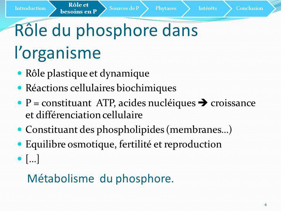 Rôle du phosphore dans l'organisme Rôle plastique et dynamique Réactions cellulaires biochimiques P = constituant ATP, acides nucléiques  croissance et différenciation cellulaire Constituant des phospholipides (membranes…) Equilibre osmotique, fertilité et reproduction […] 4 Introduction Rôle et besoins en P Sources de PPhytasesIntérêtsConclusion Métabolisme du phosphore.