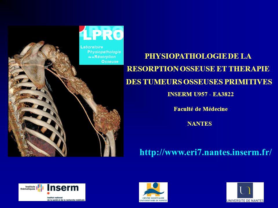 Os cortical = os compact Os trabéculaire = os spongieux STRUCTURE DU TISSU OSSEUX fonction mécanique fonction métabolique