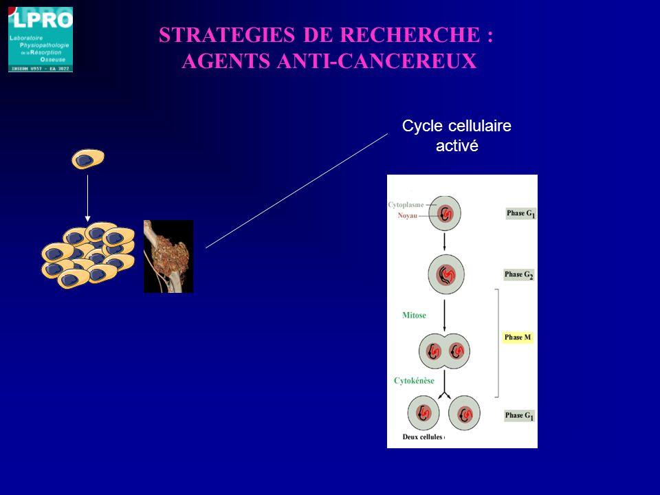 STRATEGIES DE RECHERCHE : AGENTS ANTI-CANCEREUX Cycle cellulaire activé