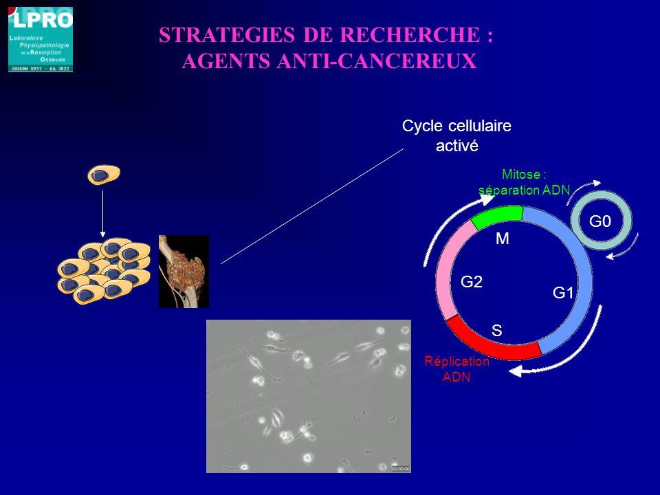 STRATEGIES DE RECHERCHE : AGENTS ANTI-CANCEREUX G0 Réplication ADN Mitose : séparation ADN G1 S G2 M Cycle cellulaire activé