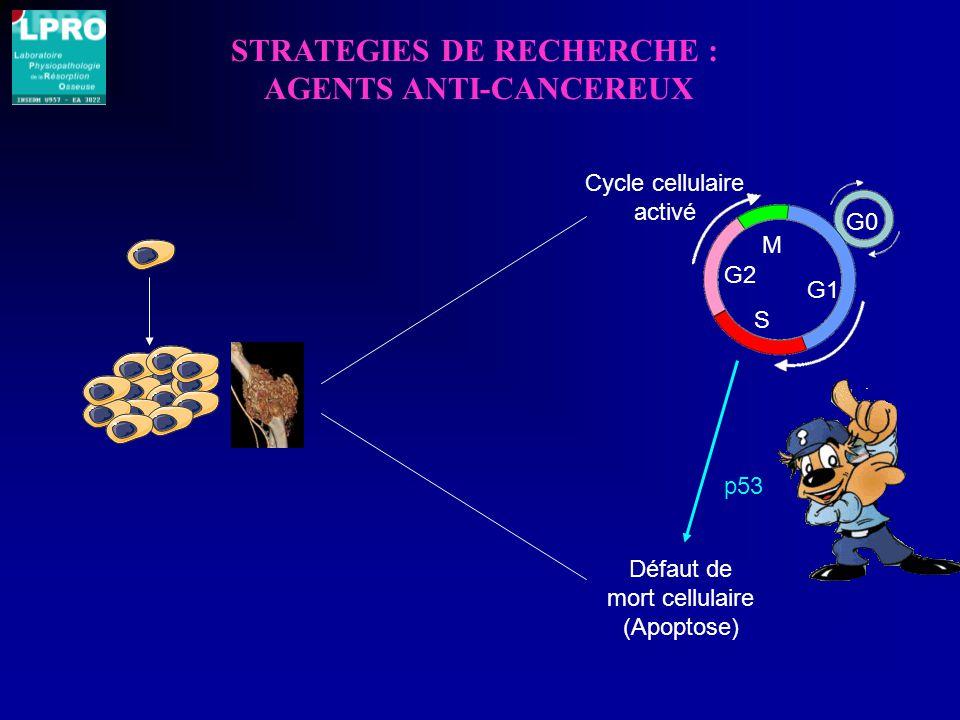STRATEGIES DE RECHERCHE : AGENTS ANTI-CANCEREUX Défaut de mort cellulaire (Apoptose) Cycle cellulaire activé G0 G1 S G2 M p53