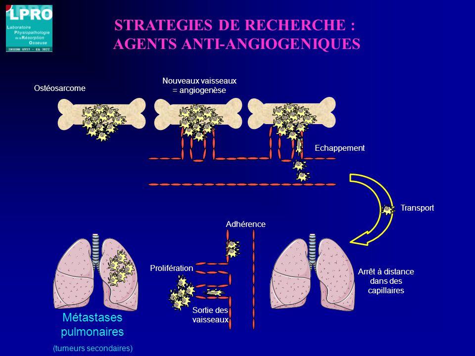 STRATEGIES DE RECHERCHE : AGENTS ANTI-ANGIOGENIQUES Ostéosarcome Adhérence Sortie des vaisseaux Métastases pulmonaires (tumeurs secondaires) Nouveaux vaisseaux = angiogenèse Echappement Transport Arrêt à distance dans des capillaires Prolifération