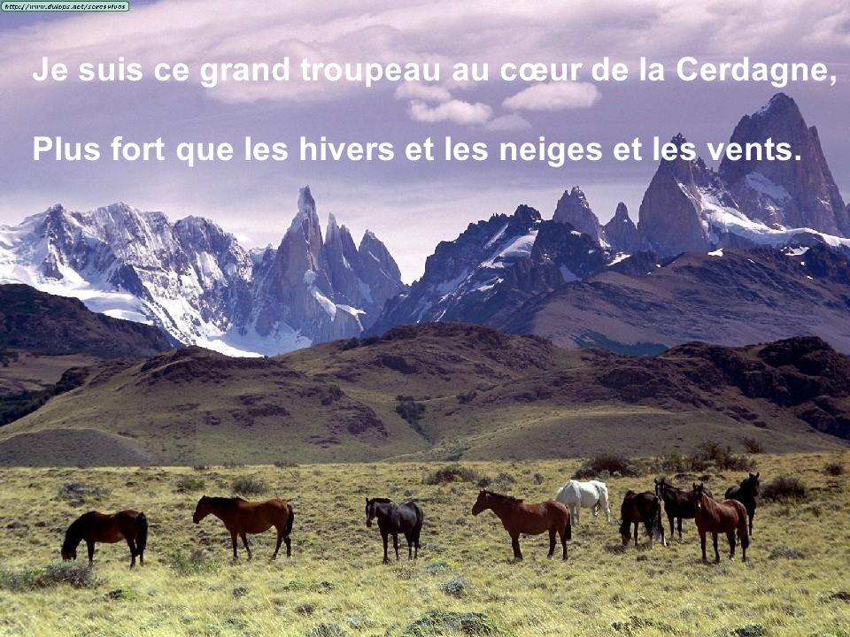 Je suis ce grand troupeau au cœur de la Cerdagne, Plus fort que les hivers et les neiges et les vents.