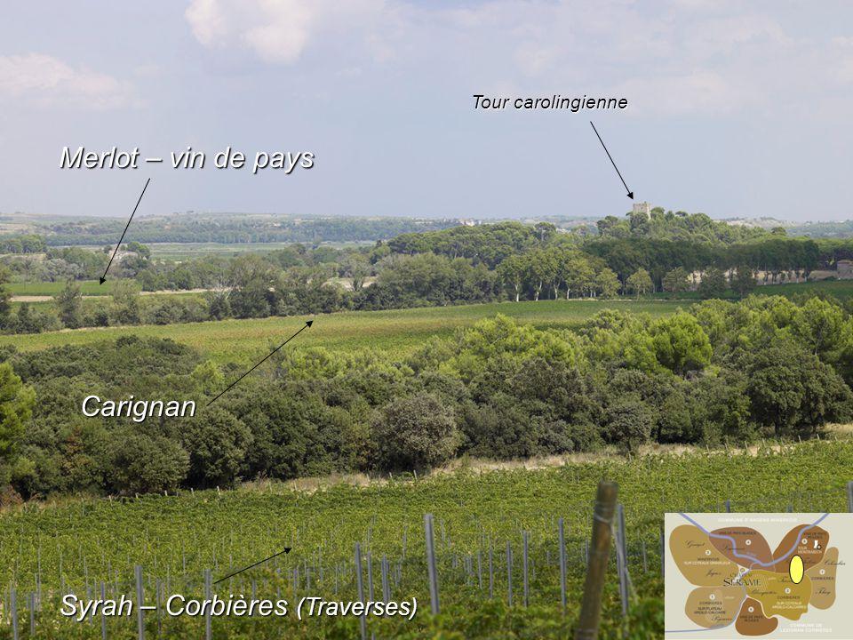 Merlot – vin de pays Syrah – Corbières (Traverses) Carignan Tour carolingienne