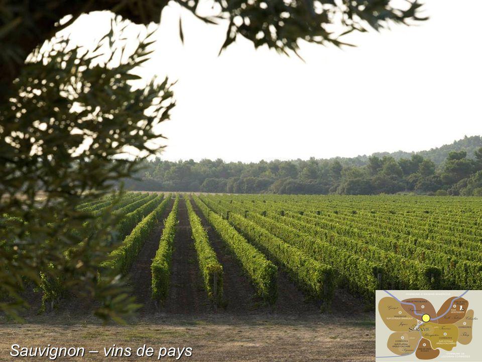 Sauvignon – vins de pays
