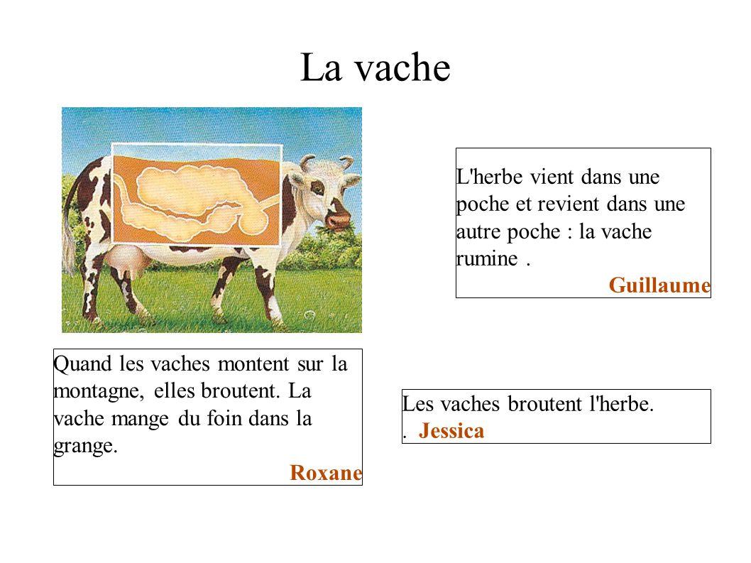 La vache L'herbe vient dans une poche et revient dans une autre poche : la vache rumine. Guillaume Quand les vaches montent sur la montagne, elles bro