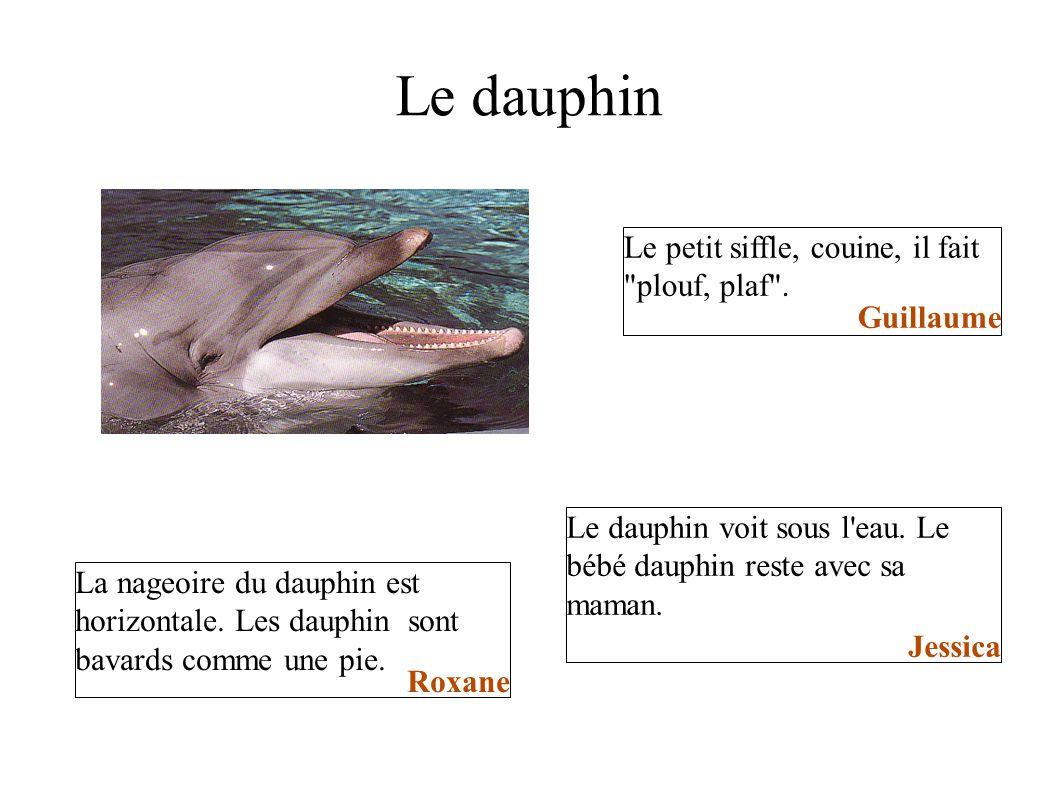 Le dauphin Le petit siffle, couine, il fait
