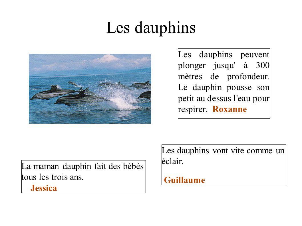 Les dauphins Les dauphins peuvent plonger jusqu' à 300 mètres de profondeur. Le dauphin pousse son petit au dessus l'eau pour respirer. Roxanne La mam