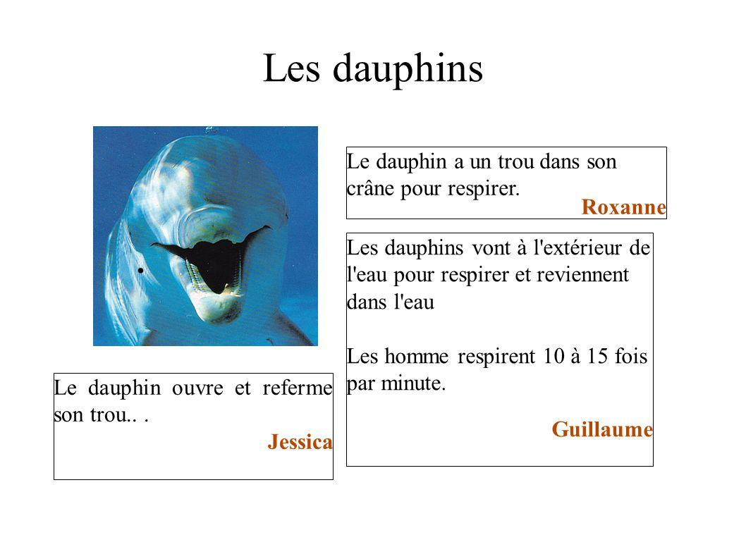 Les dauphins Le dauphin a un trou dans son crâne pour respirer. Roxanne Le dauphin ouvre et referme son trou... Jessica Les dauphins vont à l'extérieu