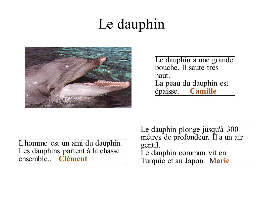 Le dauphin Le dauphin a une grande bouche. Il saute très haut. La peau du dauphin est épaisse. Camille L'homme est un ami du dauphin. Les dauphins par
