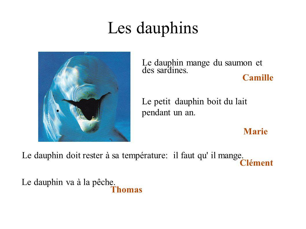 Les dauphins Le dauphin mange du saumon et des sardines. Camille Le dauphin doit rester à sa température: il faut qu' il mange. Clément Le petit dauph