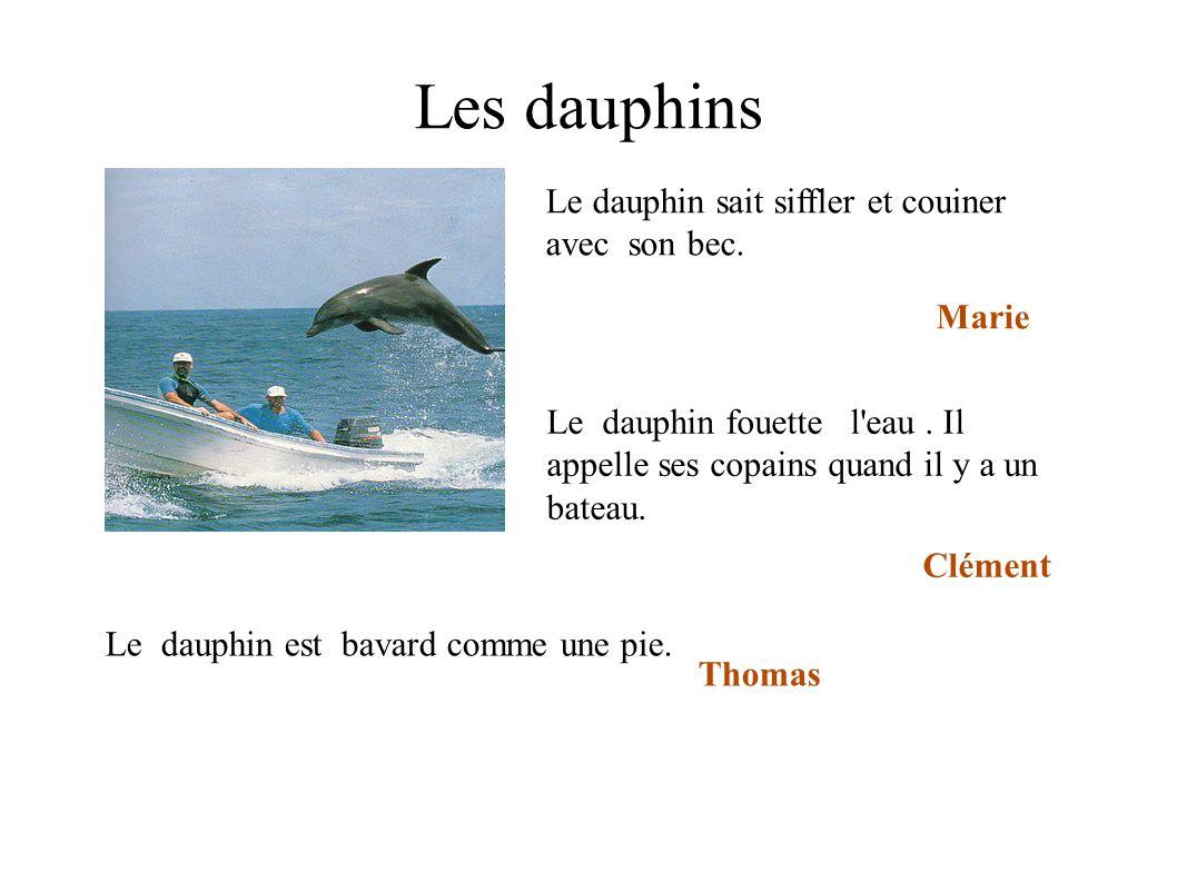 Les dauphins Le dauphin fouette l'eau. Il appelle ses copains quand il y a un bateau. Clément Le dauphin sait siffler et couiner avec son bec. Marie L