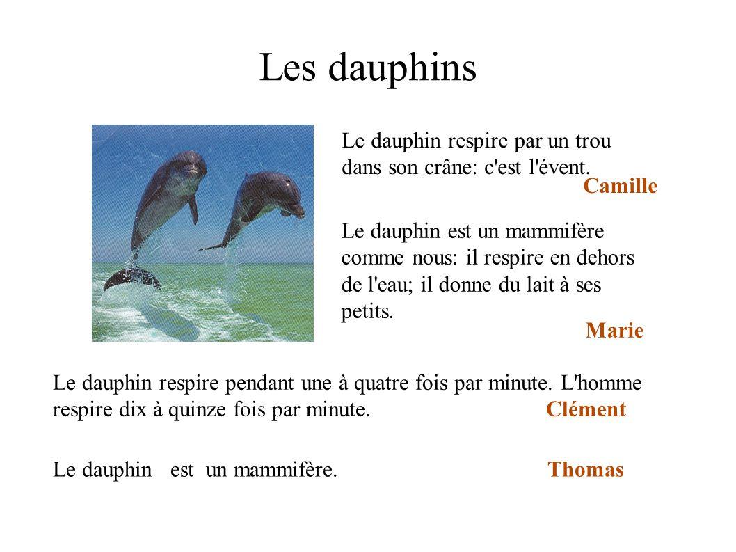 Les dauphins Le dauphin respire par un trou dans son crâne: c'est l'évent. Camille Le dauphin respire pendant une à quatre fois par minute. L'homme re