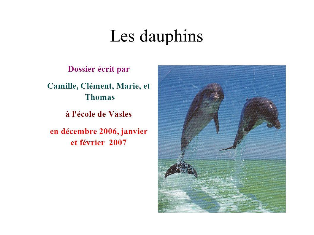 Les dauphins Dossier écrit par Camille, Clément, Marie, et Thomas à l'école de Vasles en décembre 2006, janvier et février 2007
