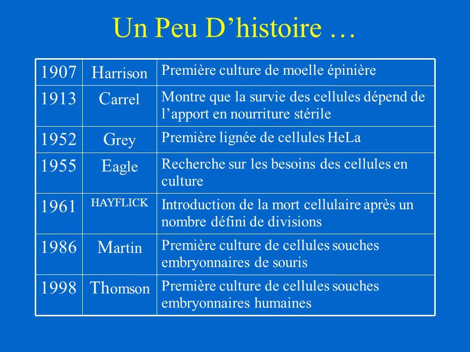 Un Peu D'histoire … Première culture de cellules souches embryonnaires humaines Th omson 1998 Première culture de cellules souches embryonnaires de so