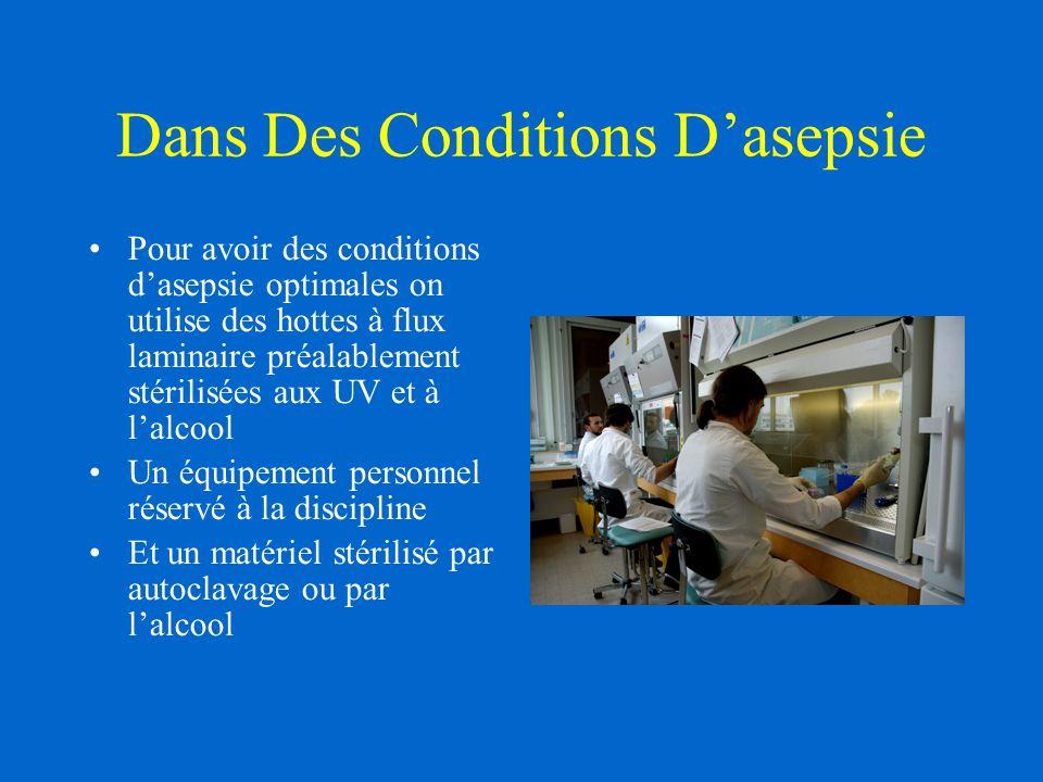 Dans Des Conditions D'asepsie Pour avoir des conditions d'asepsie optimales on utilise des hottes à flux laminaire préalablement stérilisées aux UV et