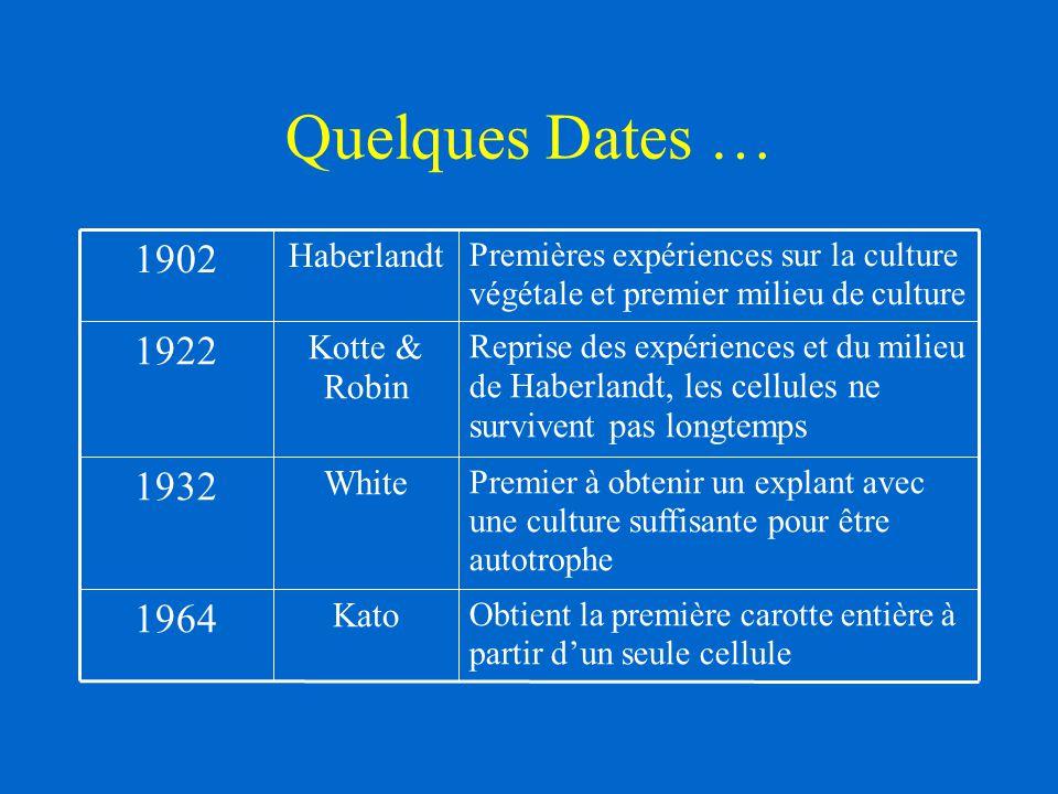 Quelques Dates … Obtient la première carotte entière à partir d'un seule cellule Kato 1964 Premier à obtenir un explant avec une culture suffisante po