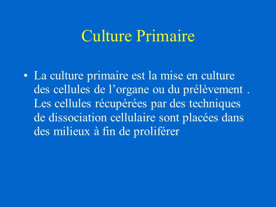 Culture Primaire La culture primaire est la mise en culture des cellules de l'organe ou du prélèvement. Les cellules récupérées par des techniques de