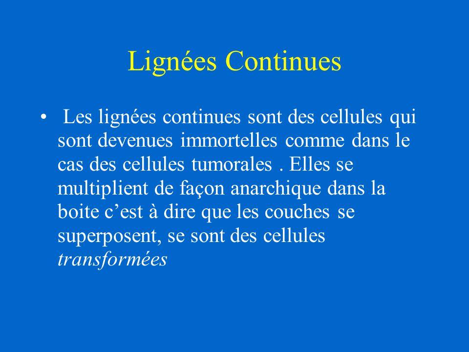Lignées Continues Les lignées continues sont des cellules qui sont devenues immortelles comme dans le cas des cellules tumorales. Elles se multiplient
