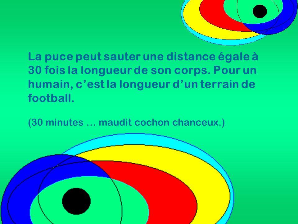 La puce peut sauter une distance égale à 30 fois la longueur de son corps. Pour un humain, c'est la longueur d'un terrain de football. (30 minutes … m