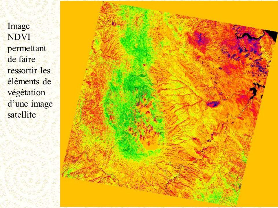 Image NDVI permettant de faire ressortir les éléments de végétation d'une image satellite