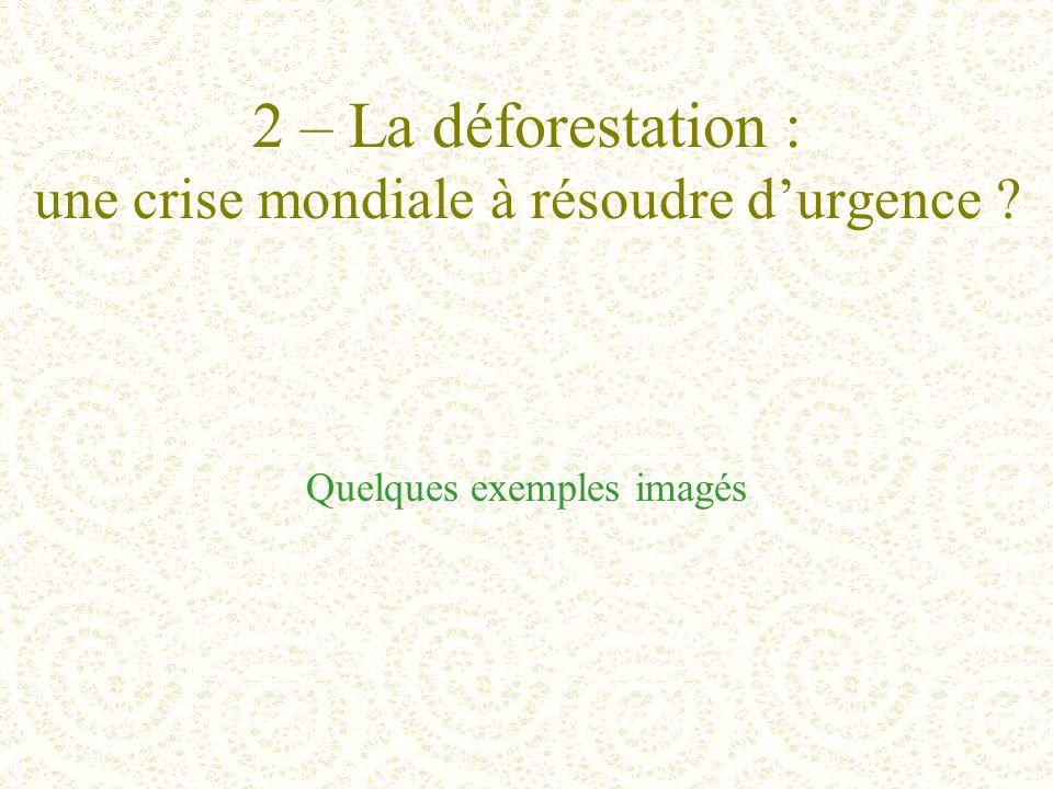 2 – La déforestation : une crise mondiale à résoudre d'urgence ? Quelques exemples imagés
