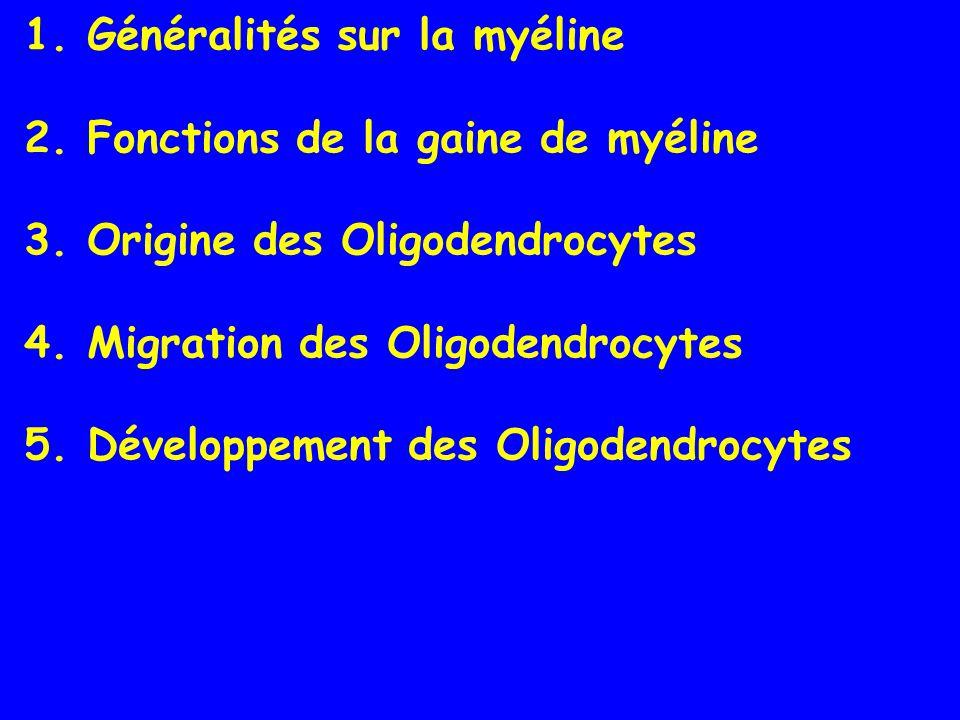 1.Généralités sur la myéline 2. Fonctions de la gaine de myéline 3.