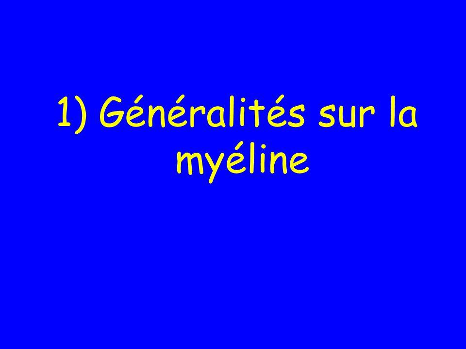 1) Généralités sur la myéline