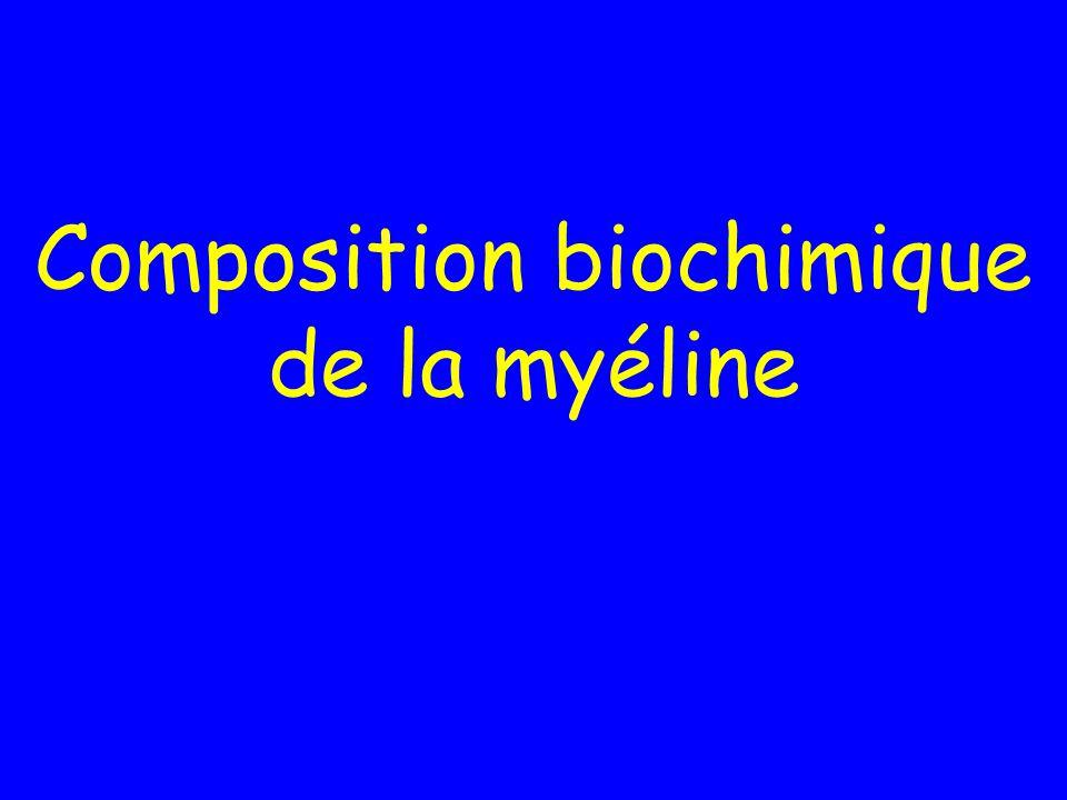 Composition biochimique de la myéline