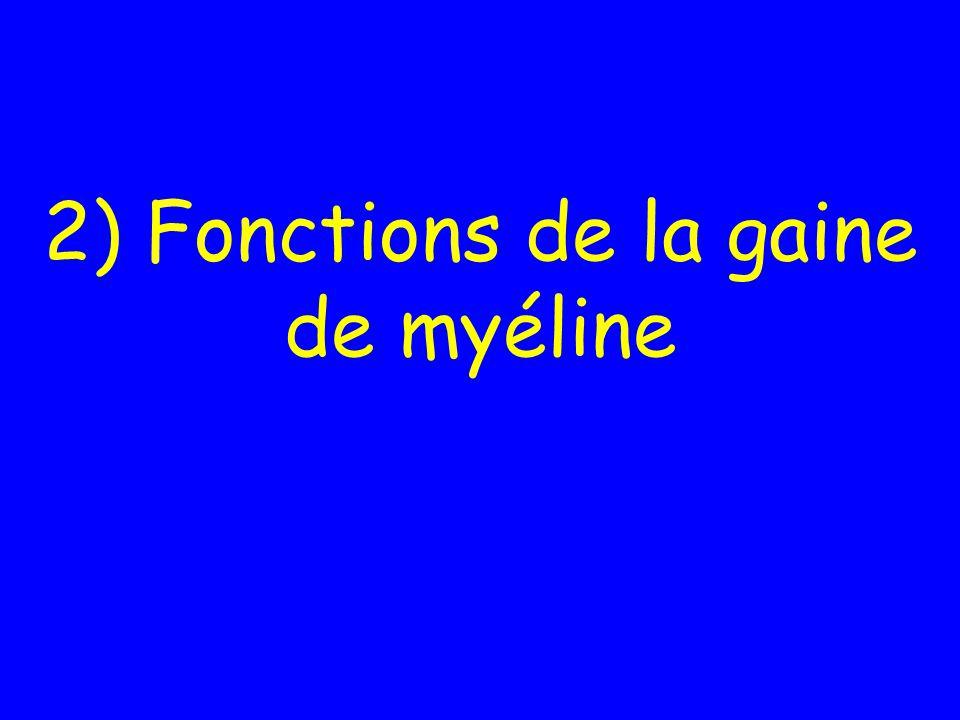 2) Fonctions de la gaine de myéline