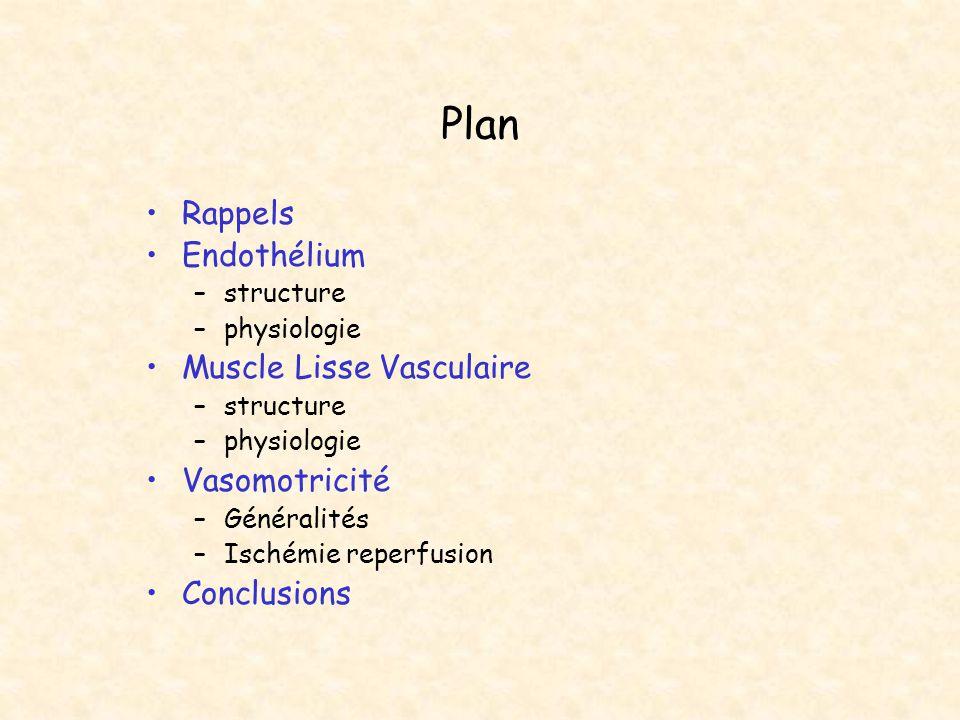Plan Rappels Endothélium –structure –physiologie Muscle Lisse Vasculaire –structure –physiologie Vasomotricité –Généralités –Ischémie reperfusion Conc