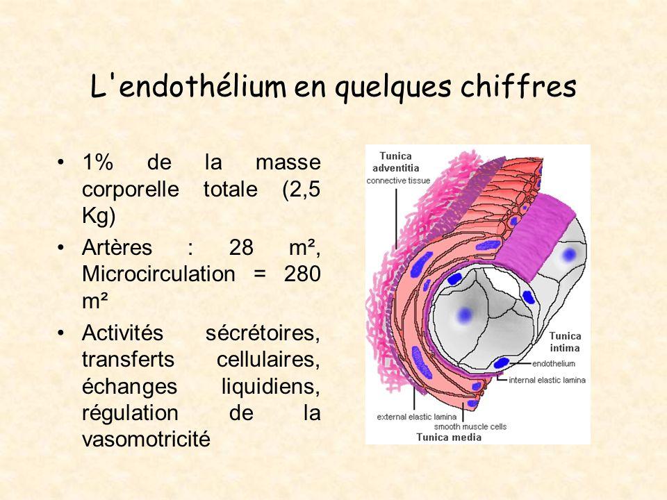 L'endothélium en quelques chiffres 1% de la masse corporelle totale (2,5 Kg) Artères : 28 m², Microcirculation = 280 m² Activités sécrétoires, transfe