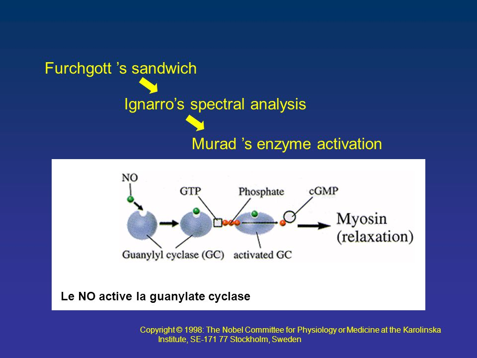 Furchgott 's sandwich Ignarro's spectral analysis Murad 's enzyme activation Copyright © 1998: The Nobel Committee for Physiology or Medicine at the Karolinska Institute, SE-171 77 Stockholm, Sweden Le NO active la guanylate cyclase