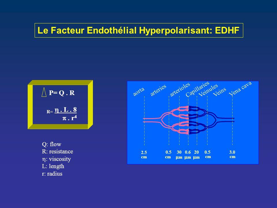 Le Facteur Endothélial Hyperpolarisant: EDHF 2.5 0.530 0.6 20 0.53.0 cm mm mm mm aorta arteries arterioles Vena cava Veins Veinules Capillaries